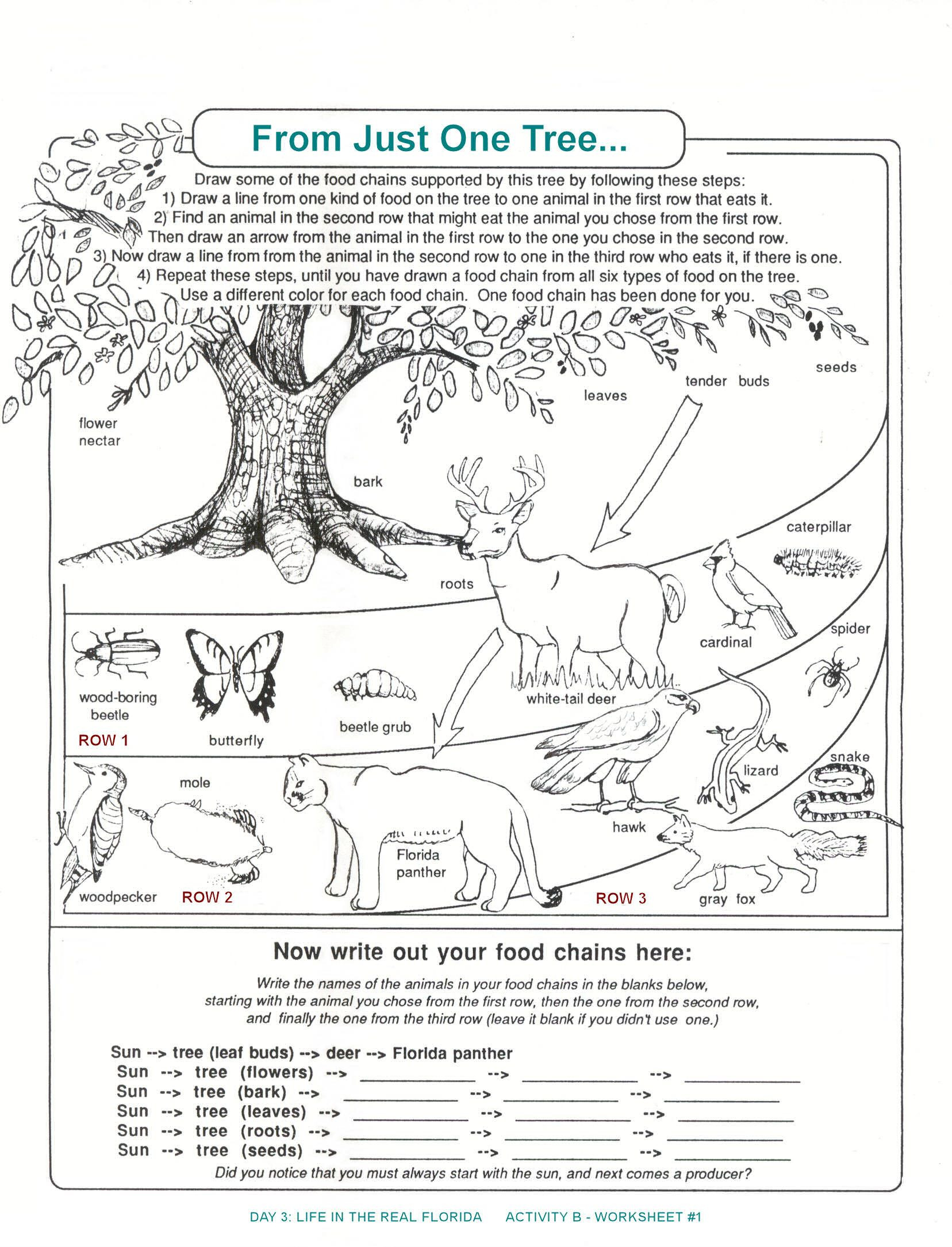 3rd Grade Ecosystem Worksheets Archbold Biological Station