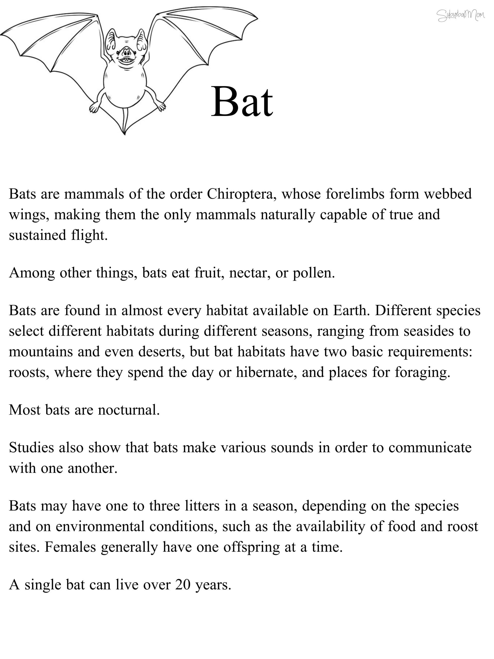 3rd Grade Habitat Worksheets Worksheet Kids Activities Bats Worksheets First Grade
