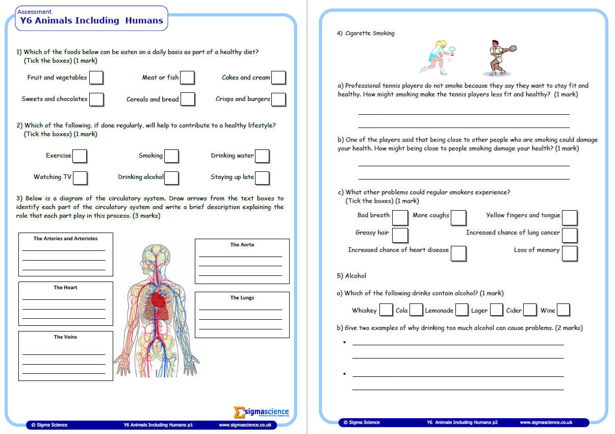 3rd Grade Human Body Worksheets Year 6 Science assessment Worksheet with Answers