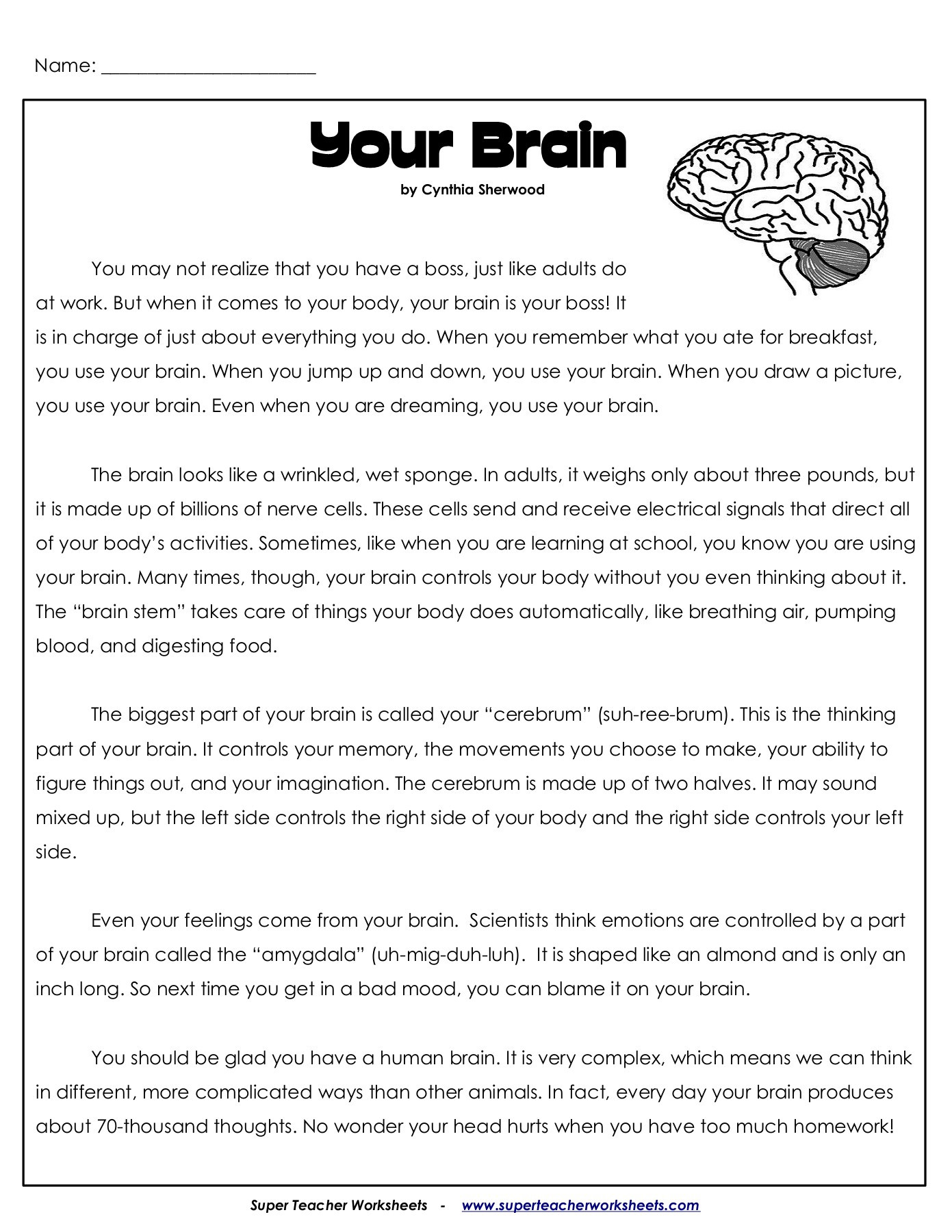 3rd Grade Human Body Worksheets Your Brain Superteacherworksheets Human Body Super Teacher