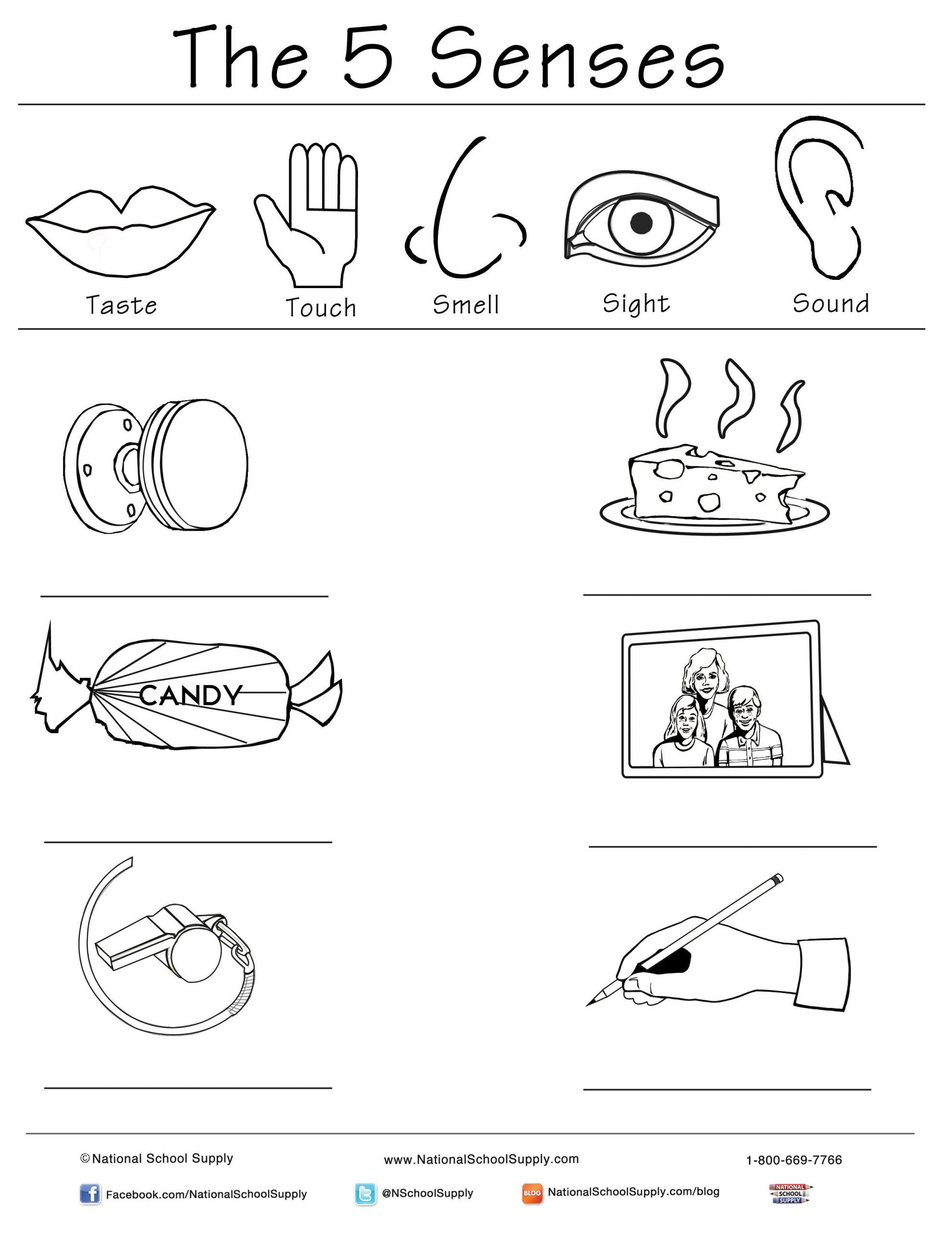 5 Senses Printable Worksheets New 5 Senses Printable is Great for Classrooms Of All Ages