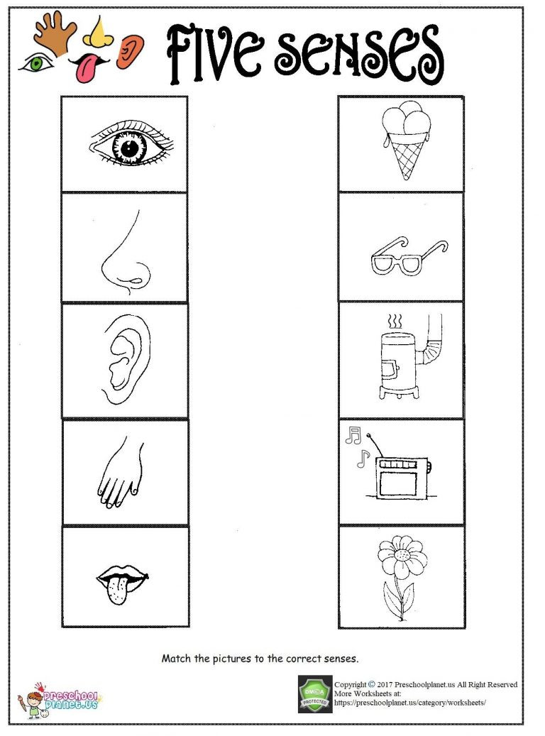 5 Senses Printable Worksheets Printable Five Senses Worksheet – Preschoolplanet