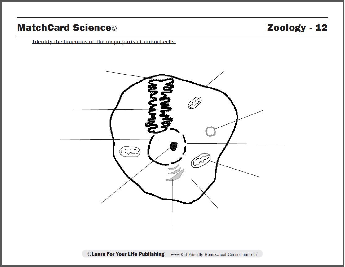 5th Grade Cell Worksheets Animal Cell Diagram