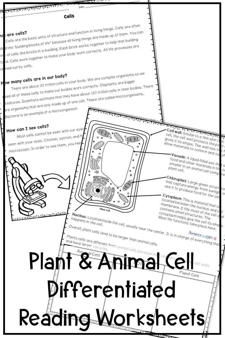 5th Grade Cell Worksheets Plant and Animal Cells Differentiated Reading Activity