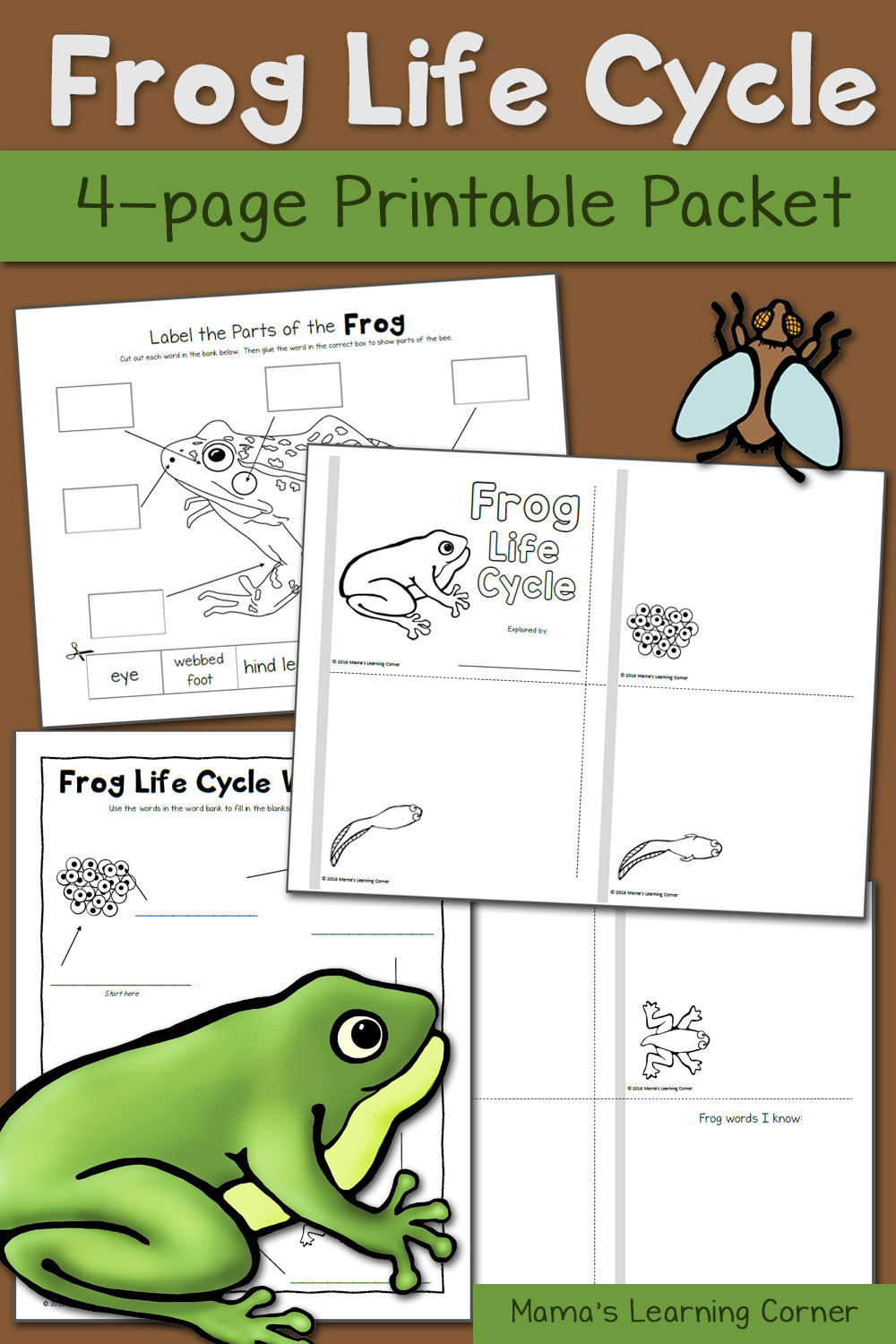 Amphibian Worksheets for Second Grade Frog Life Cycle Worksheets Mamas Learning Corner