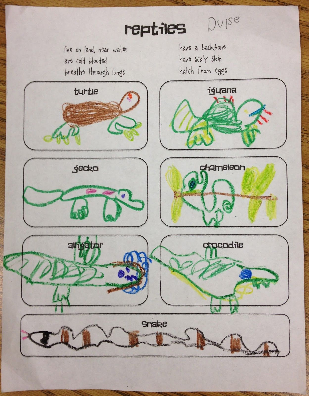 Amphibian Worksheets for Second Grade Gallery for Examples Amphibians for Kids