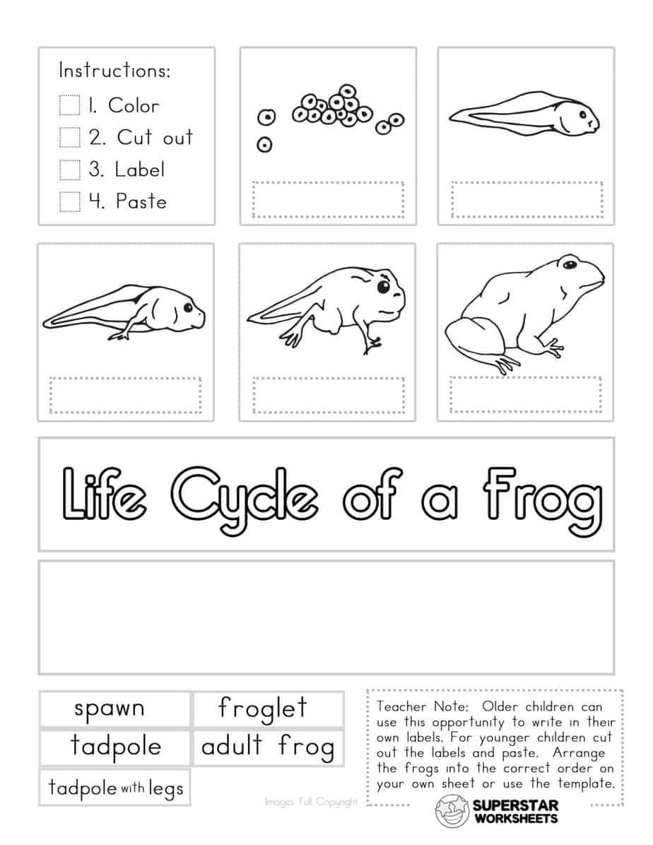 Amphibian Worksheets for Second Grade Pin On Frog Life Cycle