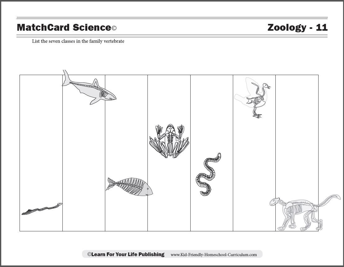 Amphibian Worksheets for Second Grade Vertebrate Worksheets for Kids