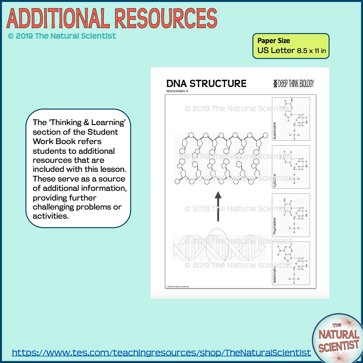 Dna Worksheet Middle School Pdf Dna Structure for Gcse & Igcse Biology