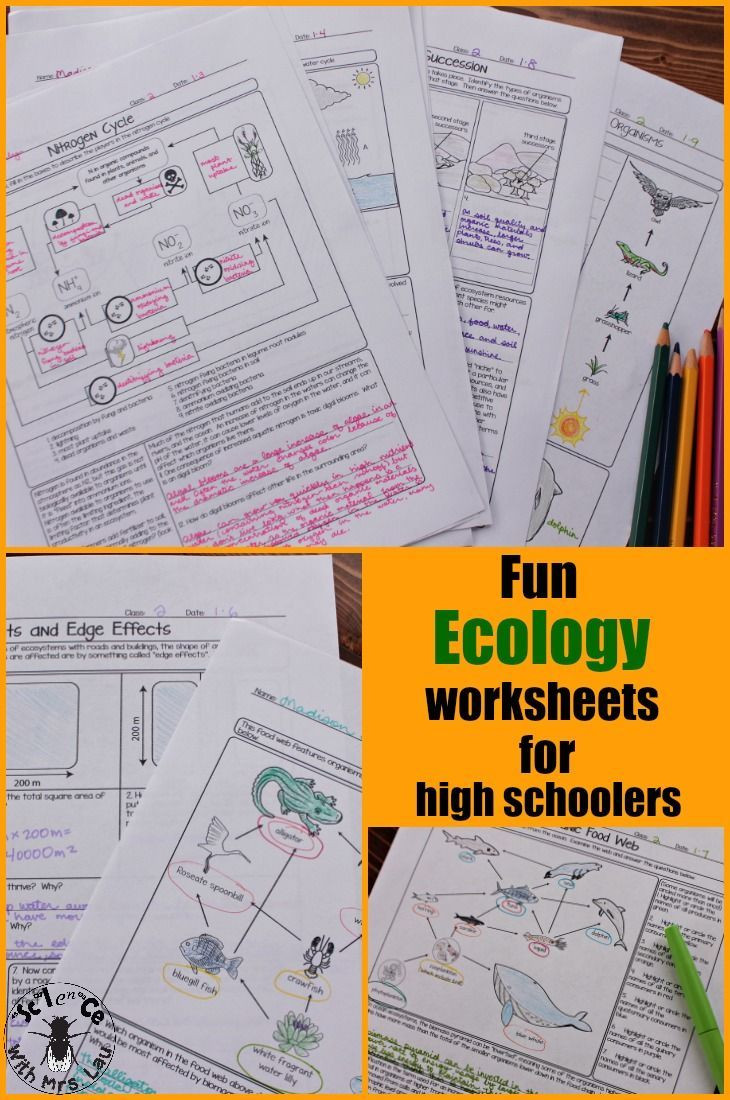 Ecology Worksheets Middle School Ecology Unit Homework Page Bundle