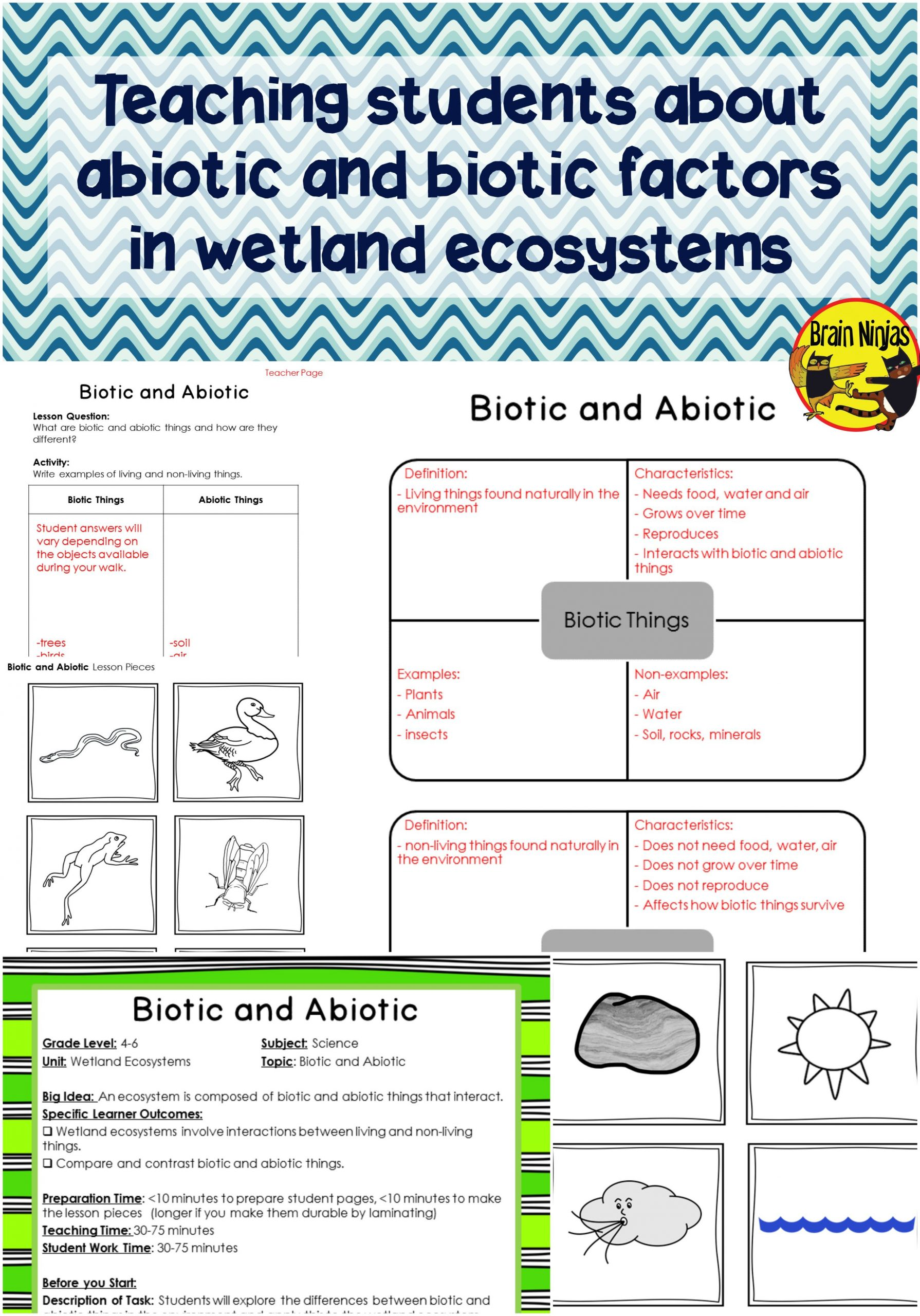 Ecology Worksheets Middle School Food Chain Worksheets 7th Grade