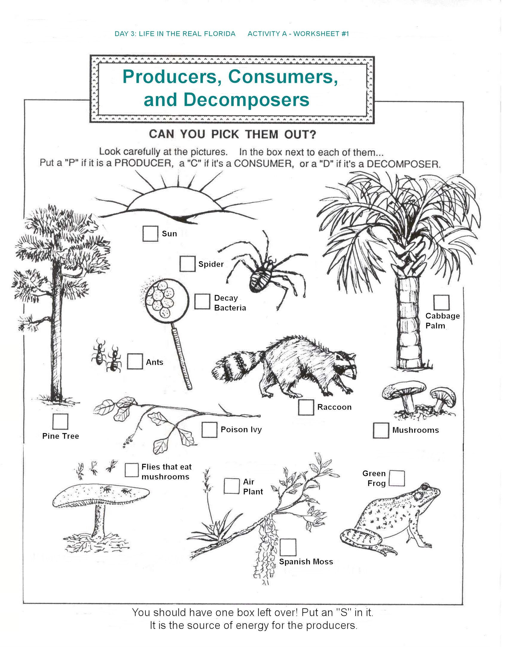 Ecosystem Worksheets 4th Grade Hbold Station Station Documents Education