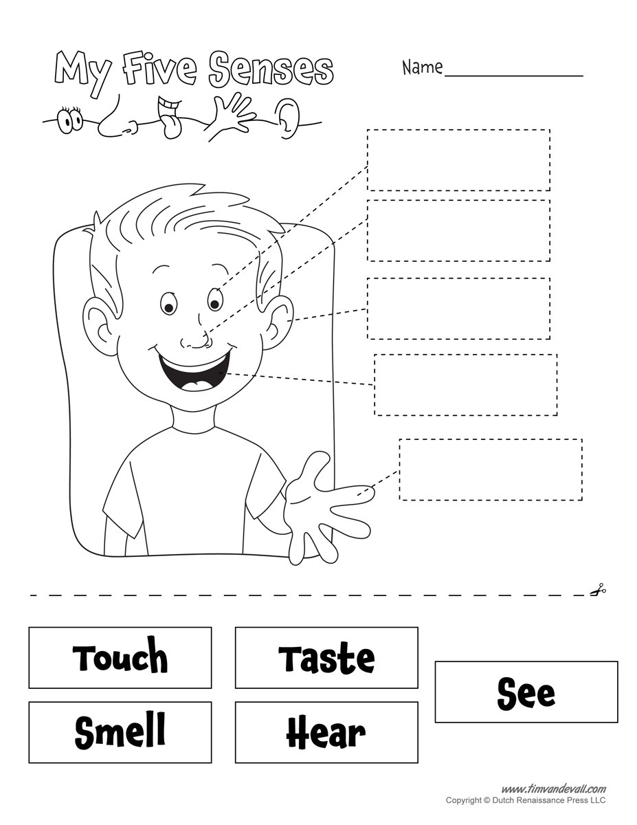 Five Senses Worksheets Preschool 5 Senses Worksheet Tim S Printables