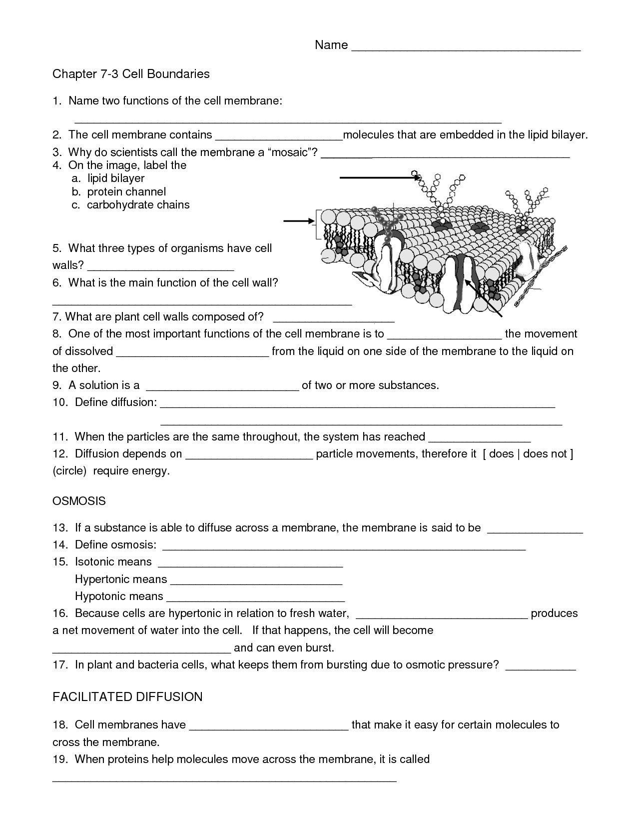 Free Printable Biology Worksheets Free Biology Worksheets for High School Printable and
