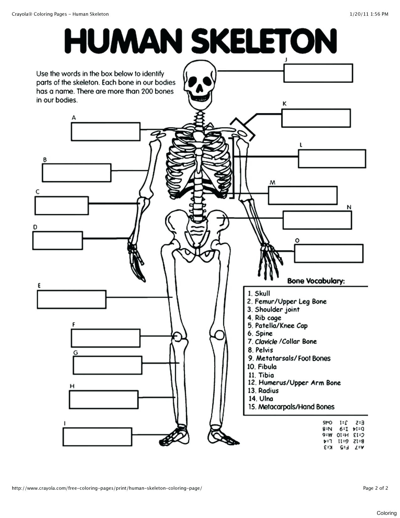 Free Printable Human Anatomy Worksheets 41 Free Printable Anatomy Coloring Pages Ideas – Slavyanka