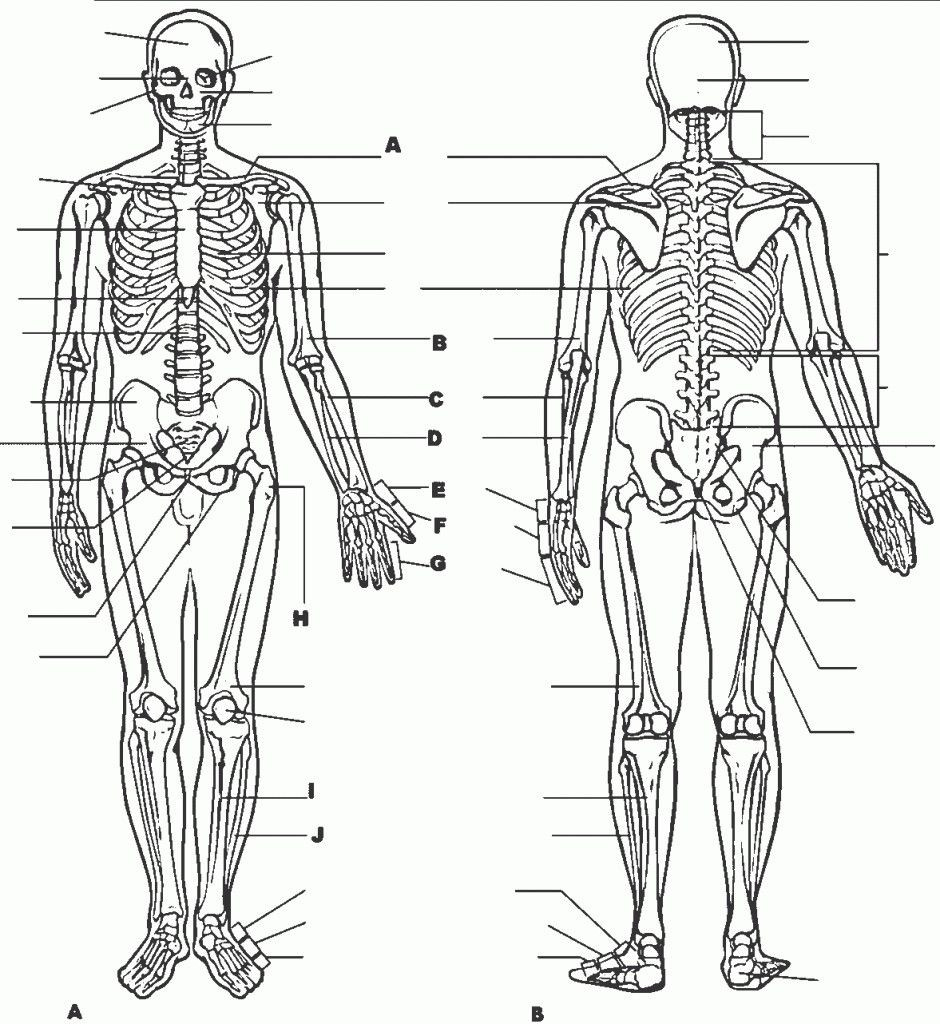 Free Printable Human Anatomy Worksheets Free Printable Human Body Worksheets Anatomy for College