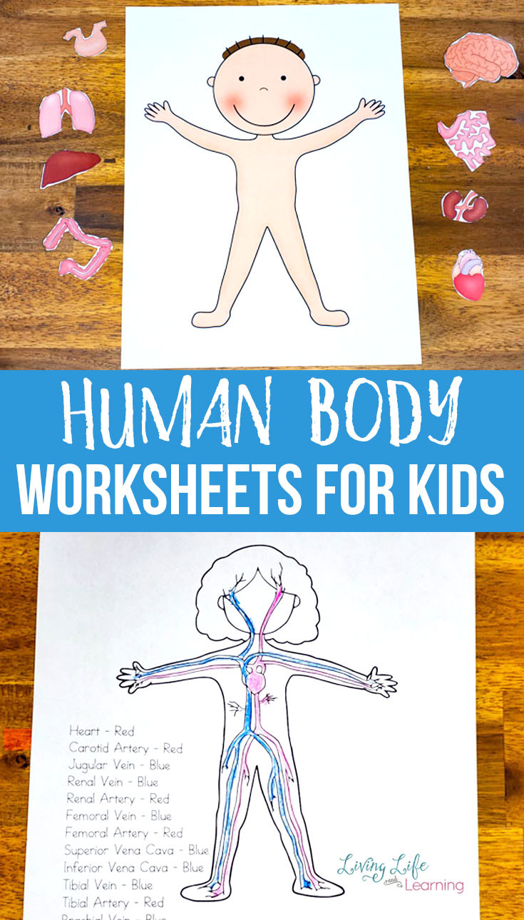 Free Printable Human Anatomy Worksheets Human Body Worksheets for Kids