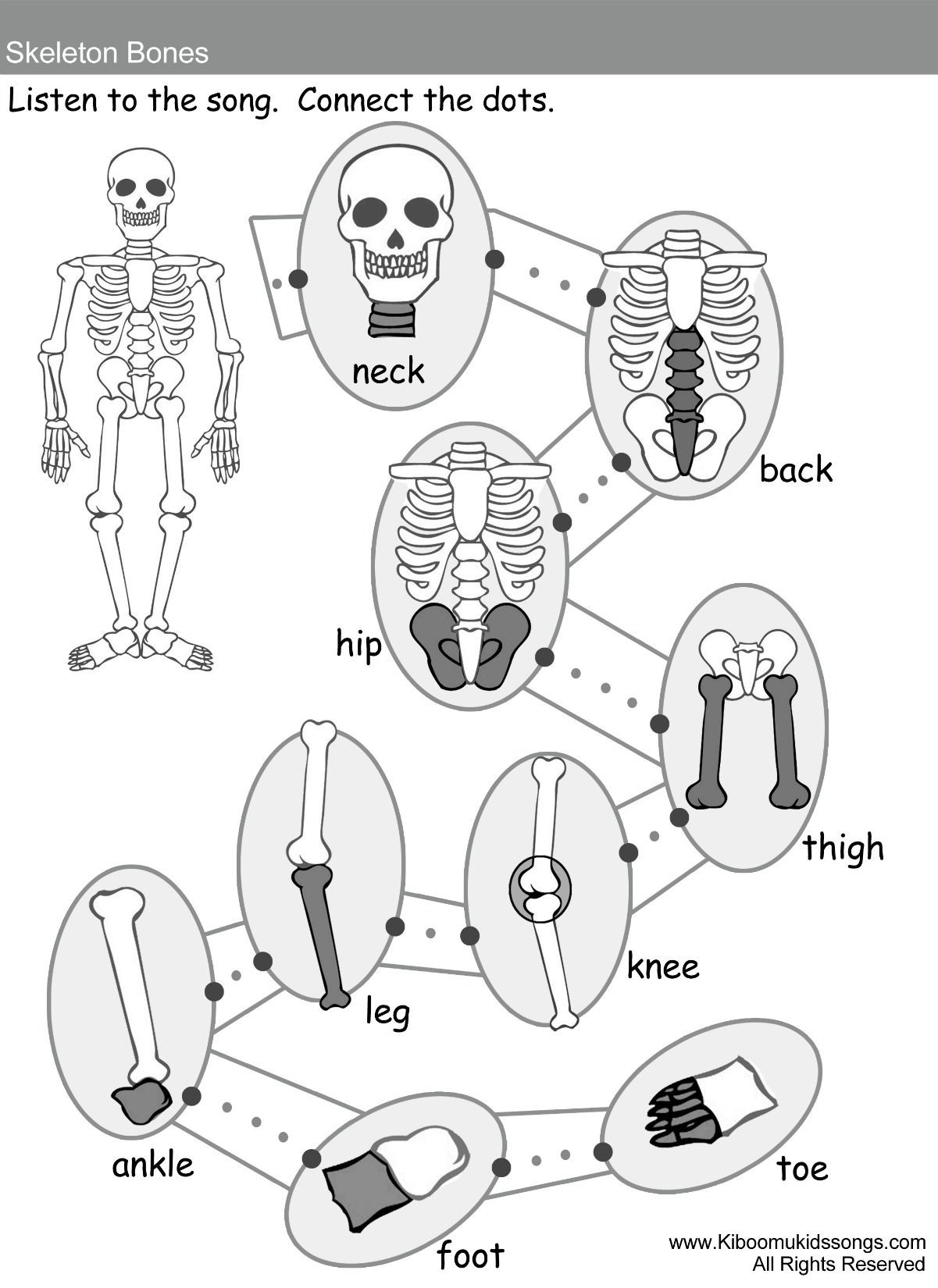 Free Printable Human Anatomy Worksheets Skeleton Bones song and Worksheets