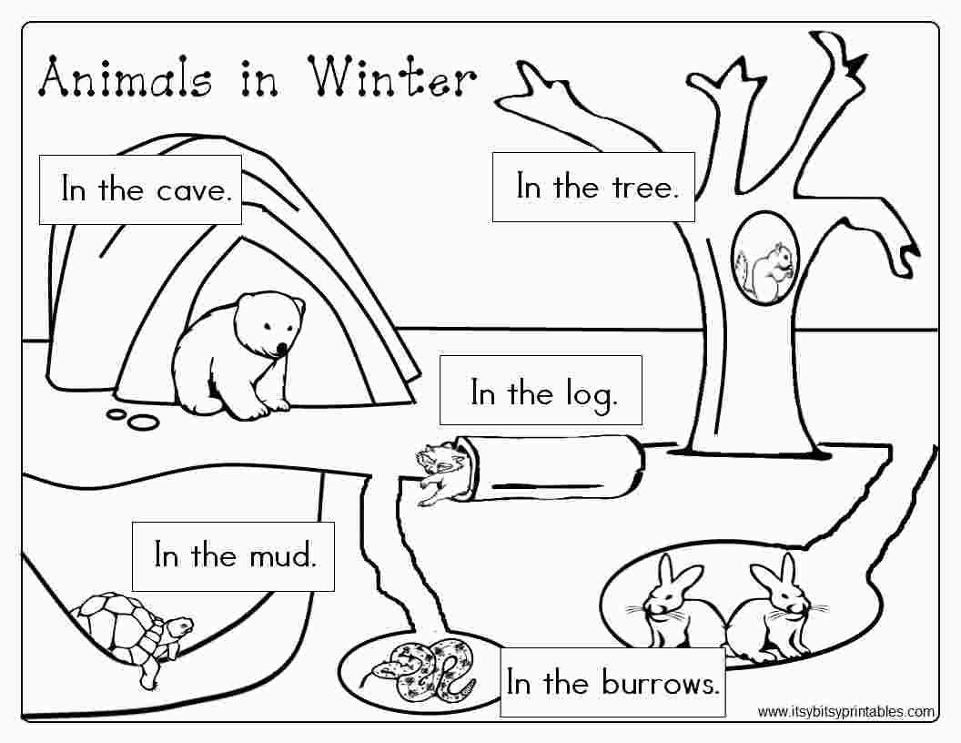 Hibernation Worksheet for Preschool Free Printable Coloring Pages Hibernating Animals
