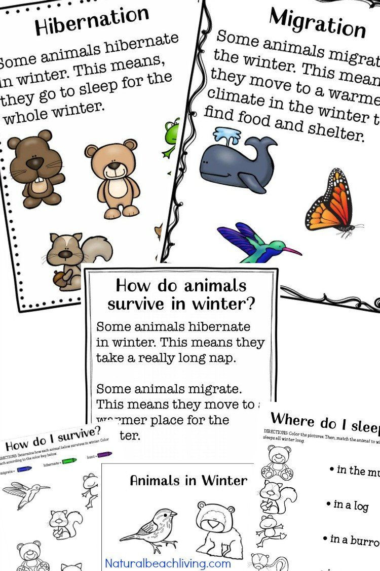 Hibernation Worksheets for Preschool Pin On Printable Example Worksheet for Preschool