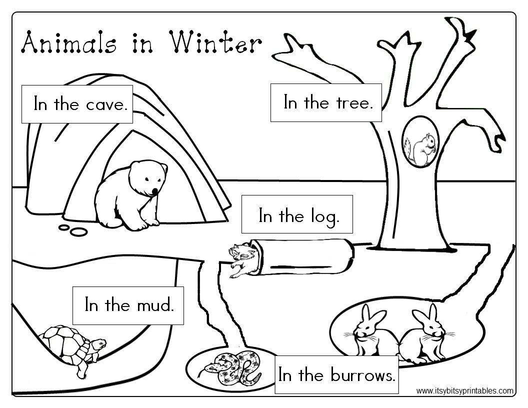 Hibernation Worksheets for Preschool Winter Worksheets for Prekinder