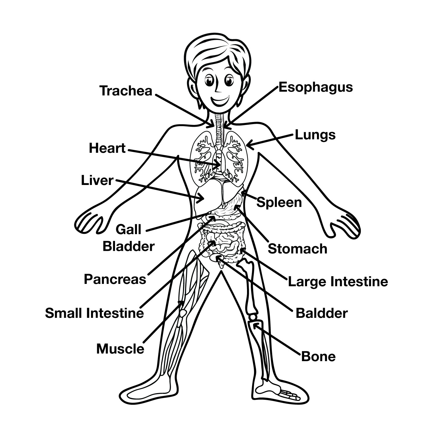 Human Body Worksheets Middle School Fractions Ks2 Grade E social Stu S Worksheets Excretory
