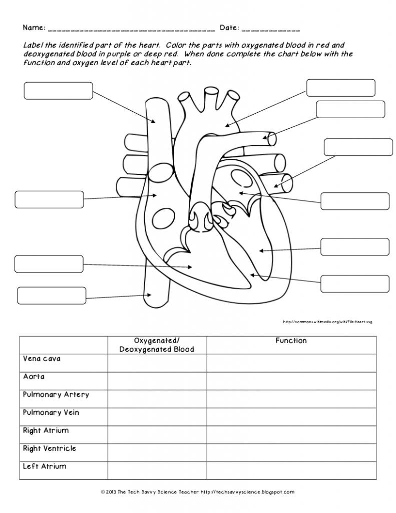 Human Anatomy Labeling Worksheets