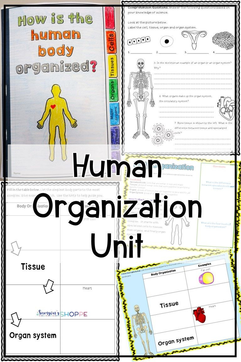 Human Body Worksheets Middle School Human Body organization Unit
