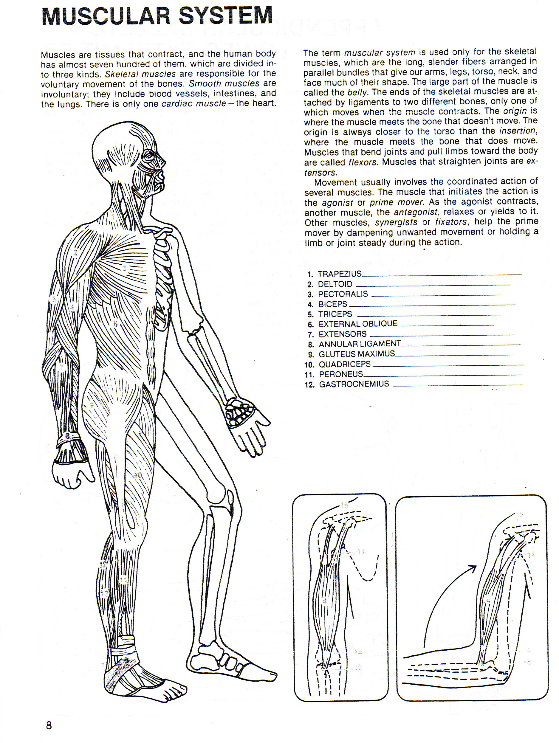 Human Body Worksheets Middle School Human Growth & Development south Junior High School Health