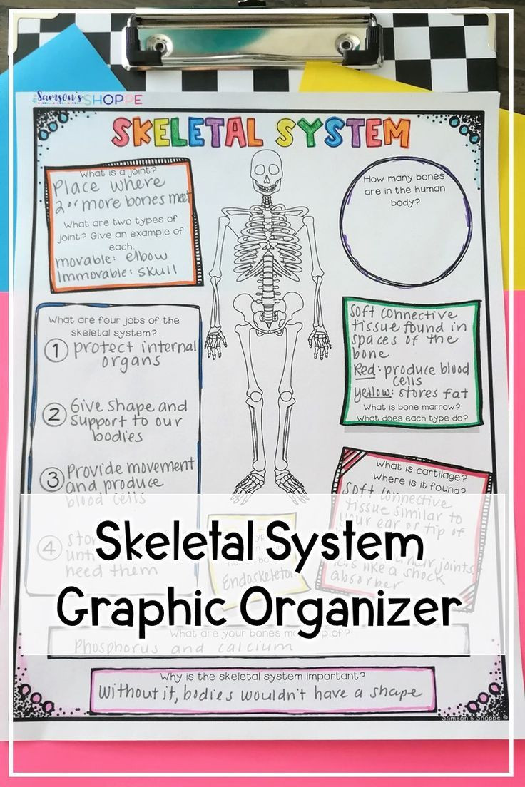 Human Body Worksheets Middle School Skeletal System Activity Worksheet In 2020