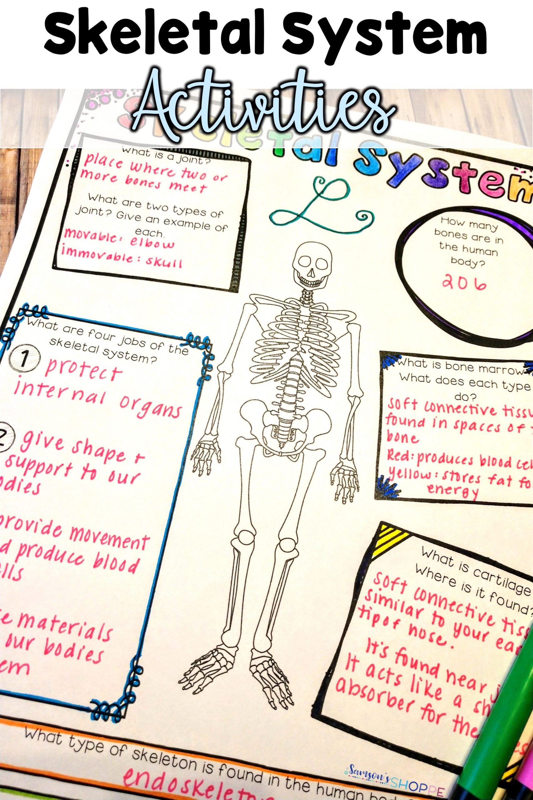 Human Body Worksheets Middle School Skeletal System Activity Worksheet