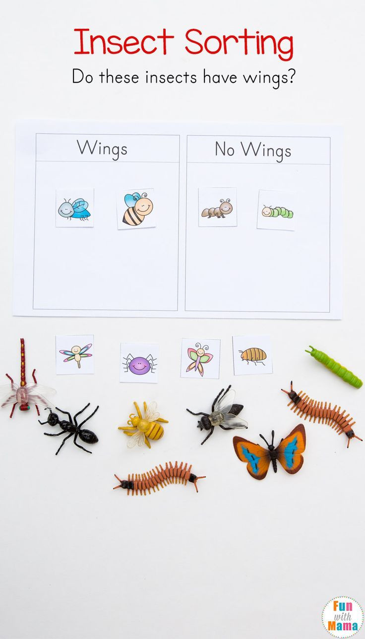 Insect Worksheets for Preschoolers Preschool Insect theme sorting Worksheet Bug Activities