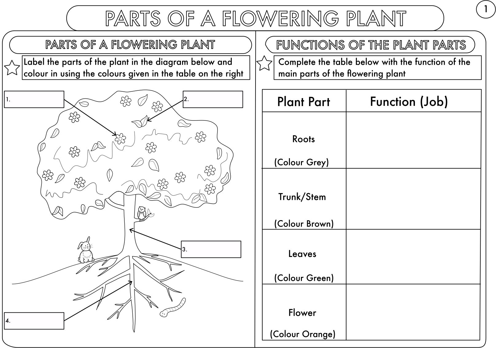 Middle School Science Worksheets Pdf Year 3 Science Parts Of A Plant Worksheet