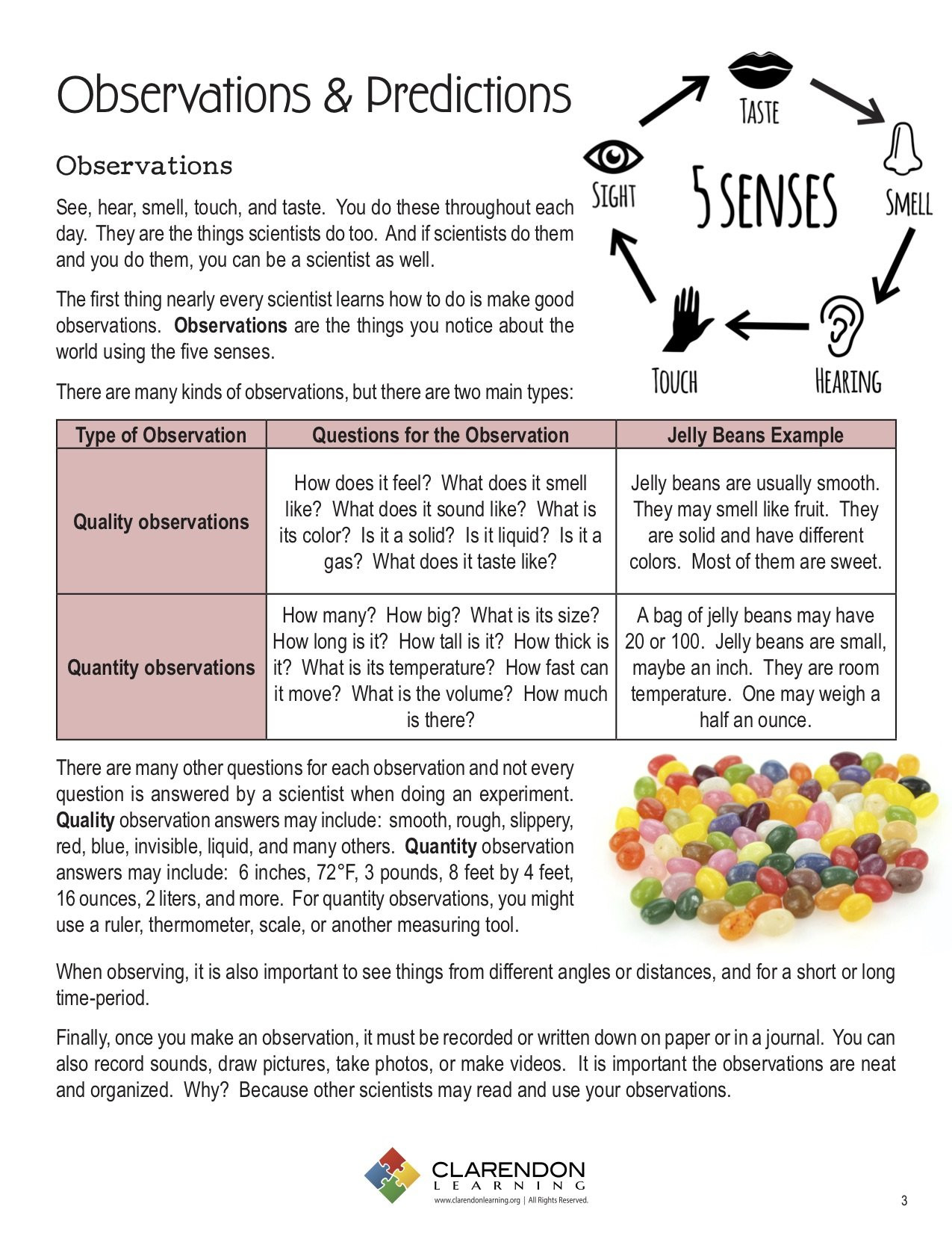 Prediction Worksheets 3rd Grade Observations & Predictions Lesson Plan