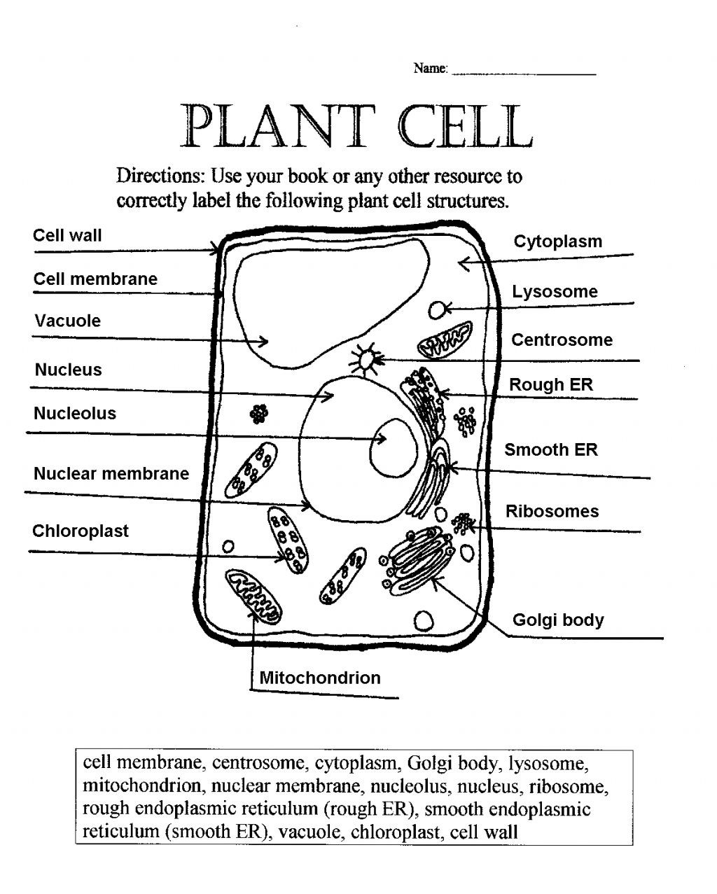 Printable Cell Worksheets 77 Best S Animal Cell Coloring Worksheet