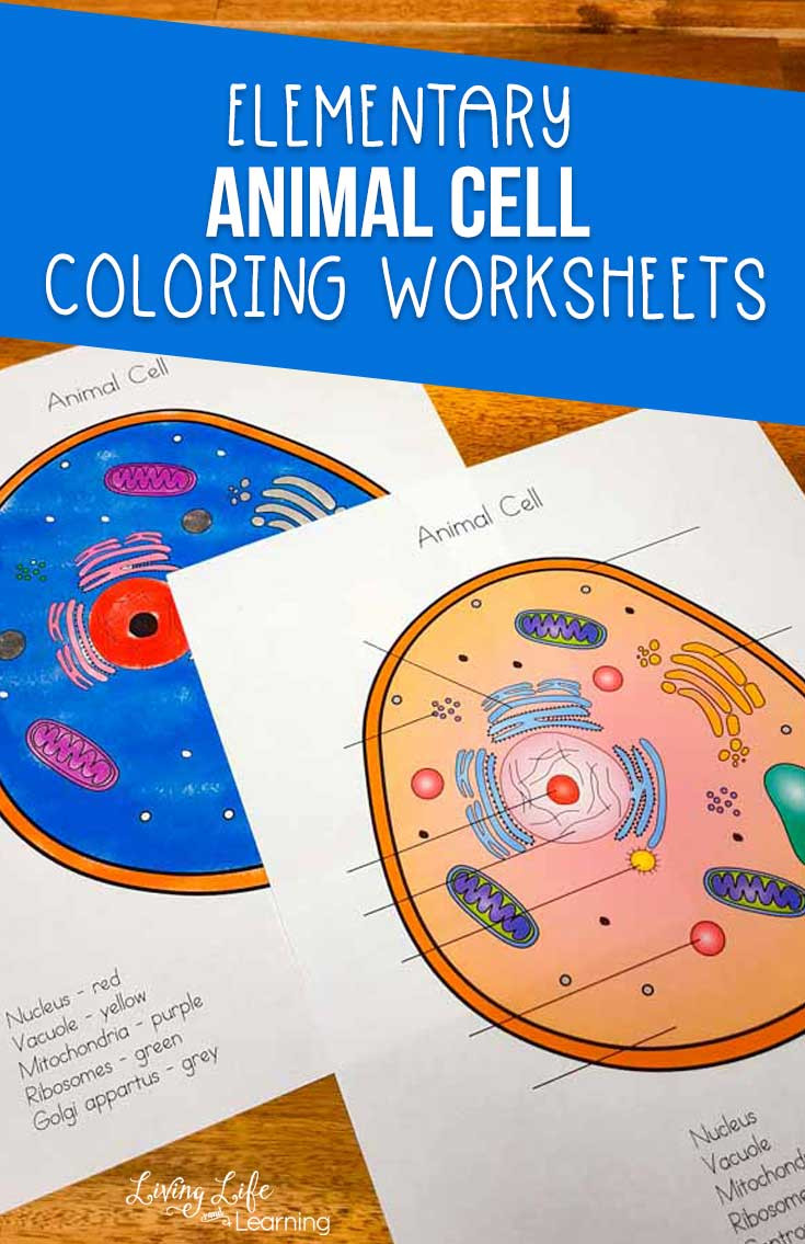 Printable Cell Worksheets Animal Cell Coloring Worksheet