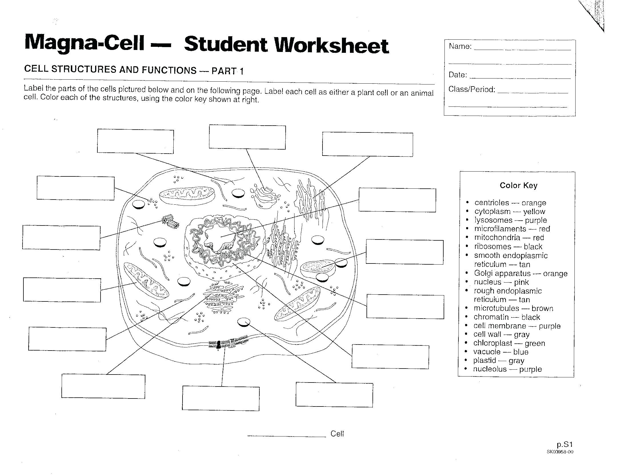Printable Cell Worksheets Prokaryotic and Eukaryotic Worksheet