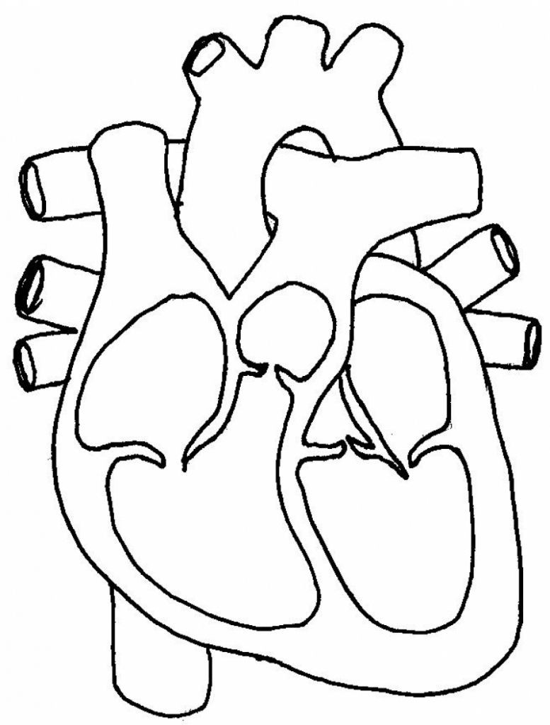 Printable Heart Diagram Real Heart the Label Of A Human Heart Real Clipart Clip Art