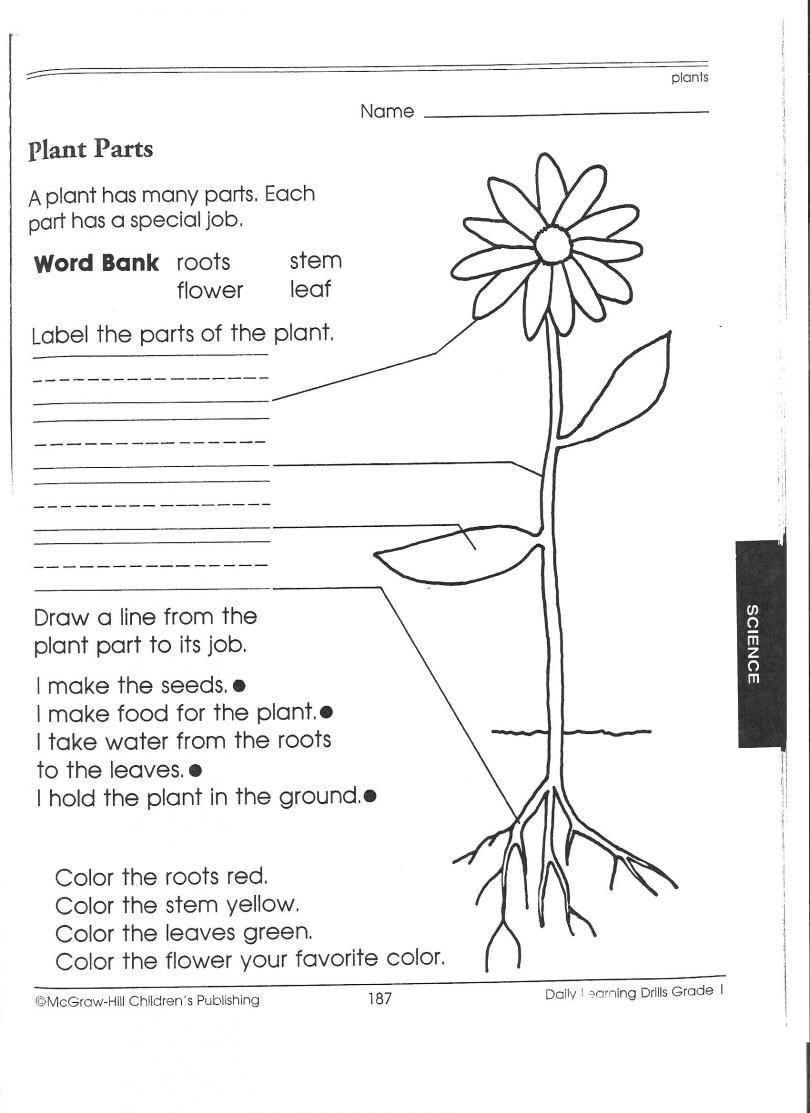 Science Worksheet 1st Grade Plant Worksheets for First Grade