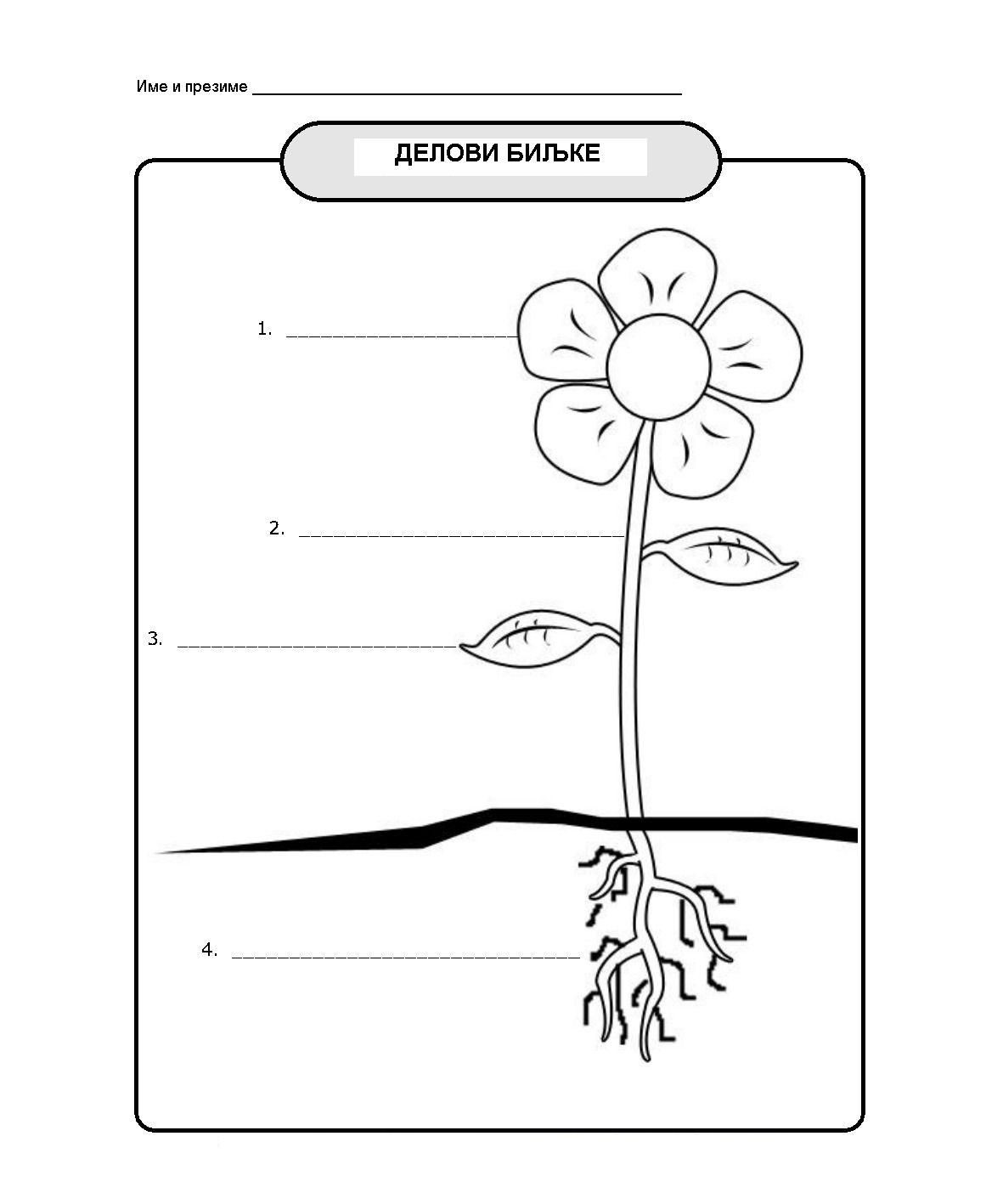 Science Worksheet First Grade °Å¸ñ€°²°¸ ñ€°°°·ñ€°µ°´ Reading