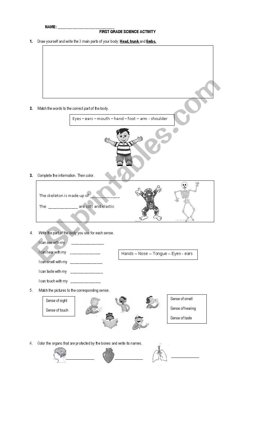 Science Worksheet First Grade First Grade Science Worksheet Esl by Anpamaji Worksheets