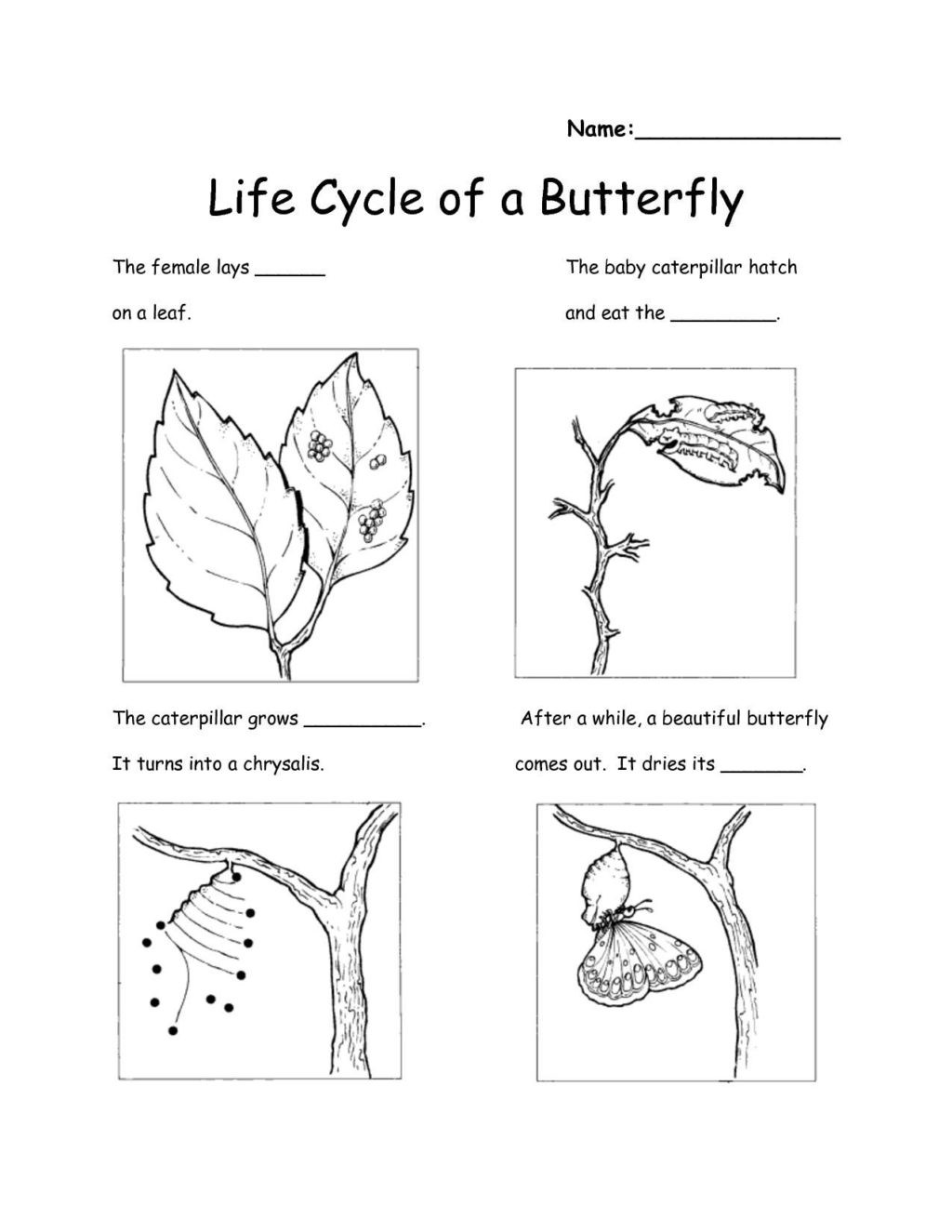 Second Grade Science Worksheets Free Worksheet Worksheet astonishing Science Worksheets for