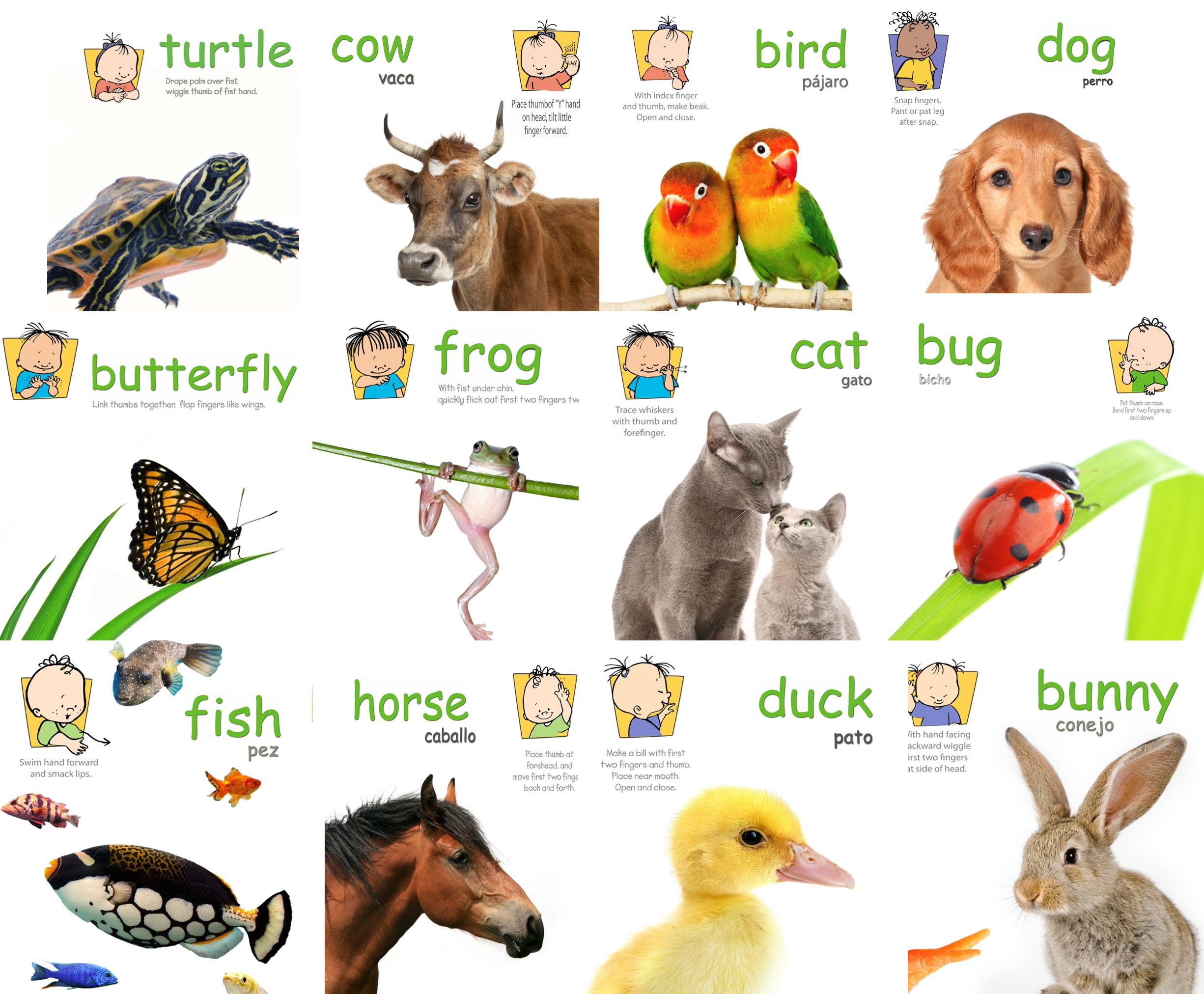 Sign Language Poster Printable Animal Signs Poster Pack