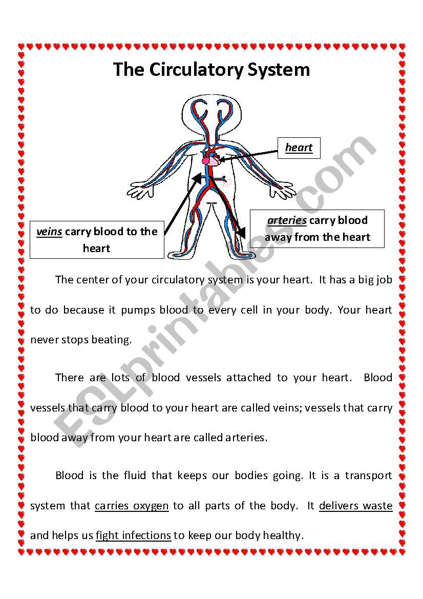 2nd Grade Health Worksheets Circulatory System 2nd Grade Esl Worksheet by Jessraber