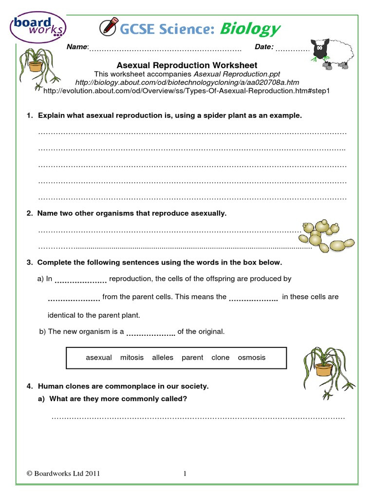 Asexual Reproduction Worksheets Middle School A Ual Reproduction Worksheet Boardworks