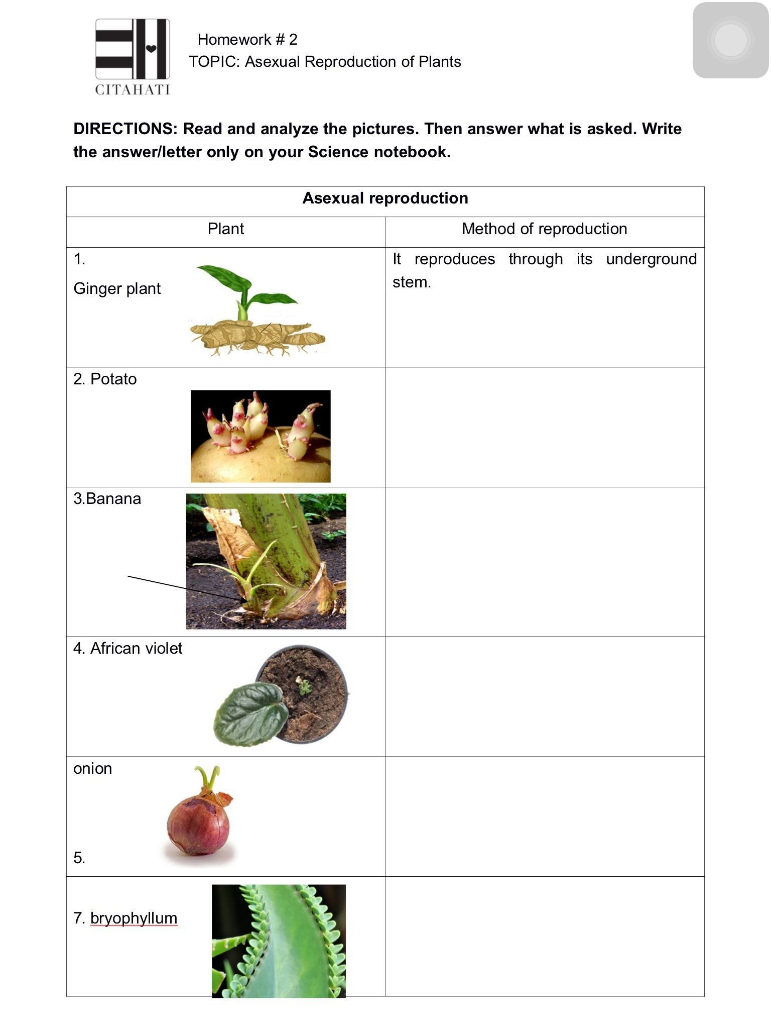 Asexual Reproduction Worksheets Middle School Pin On Worksheet Templates for Student