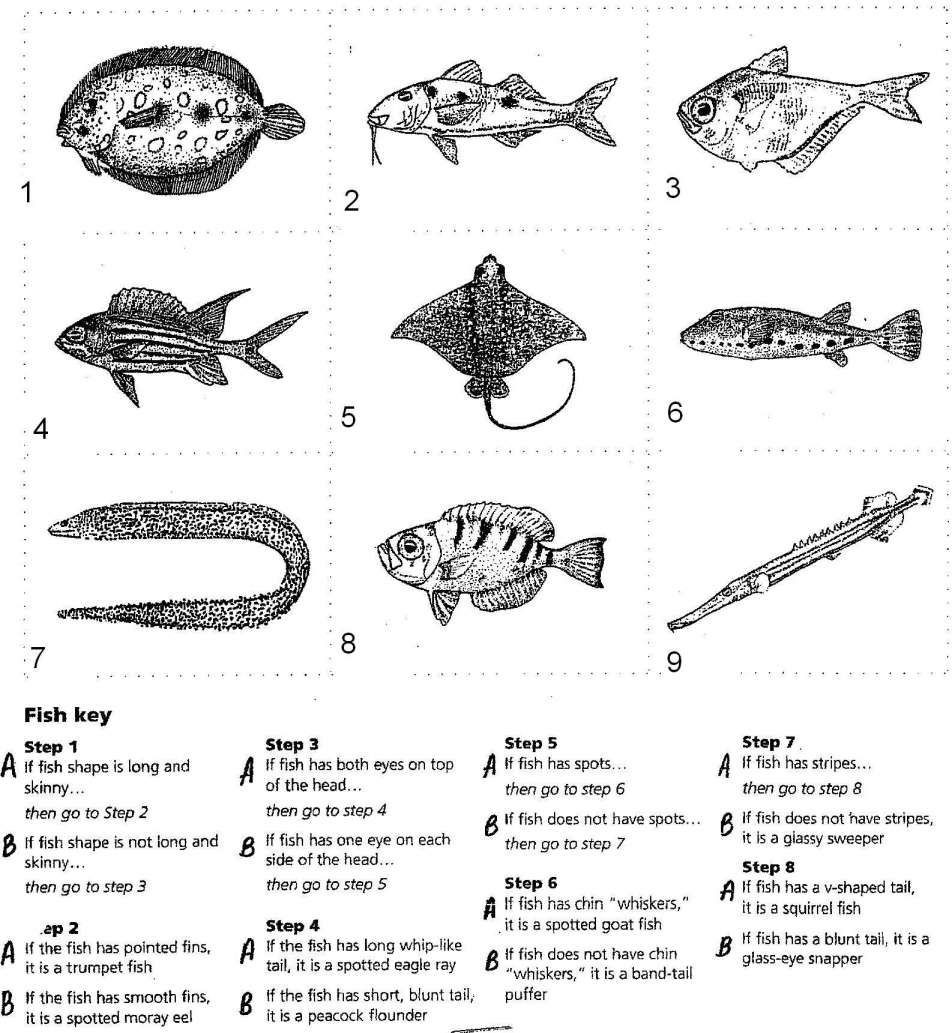 Dichotomous Key Worksheets Middle School 10 Marine Science Fish Dichotomous Key Worksheet Science