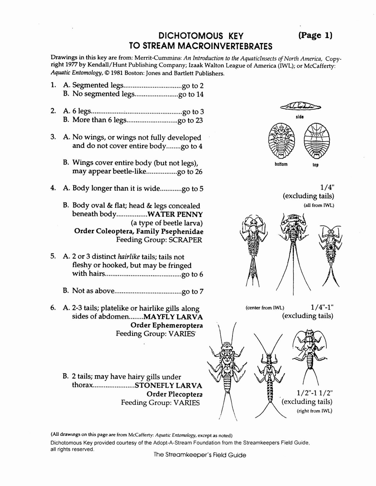 Dichotomous Key Worksheets Middle School 50 Dichotomous Key Worksheet Middle School In 2020