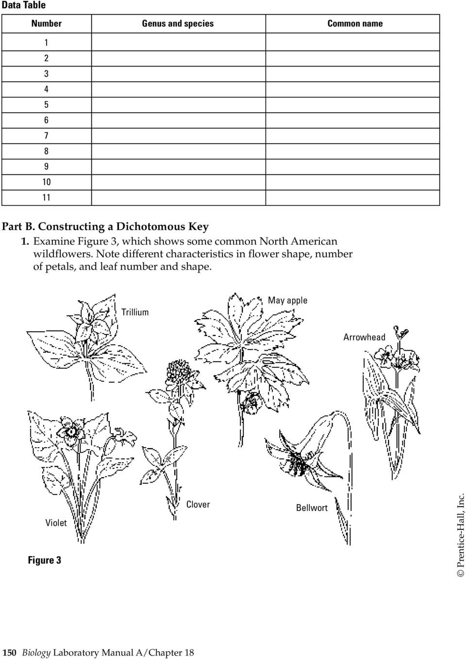 Dichotomous Key Worksheets Middle School Using and Constructing A Dichotomous Key Pdf Free Download