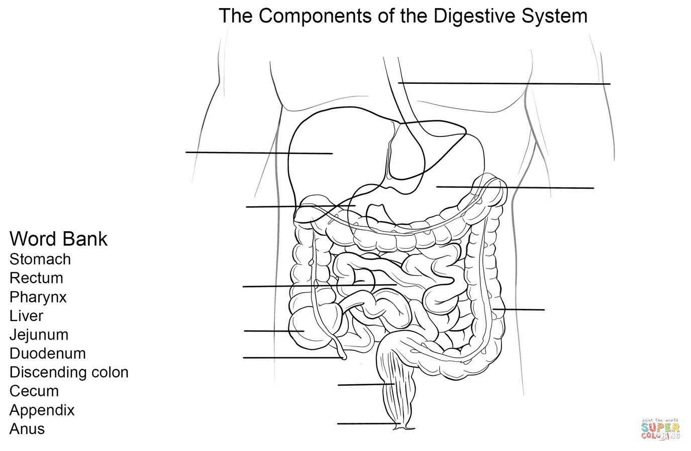 Digestive System Worksheets Middle School Digestive System Diagram to Label
